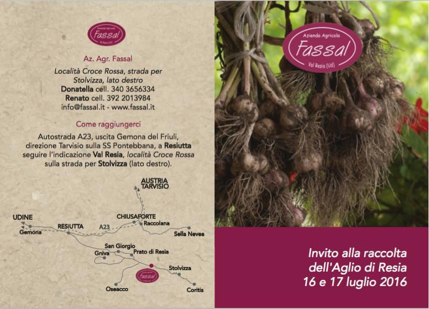raccolta dell'aglio - Fassal